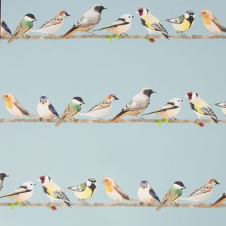 Fresco Tweeting Sky Blue Wallpaper - 106628