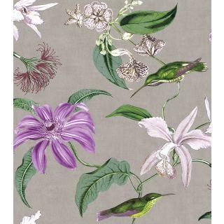 Tropique Hummiingbird - Silver and Purple 276595