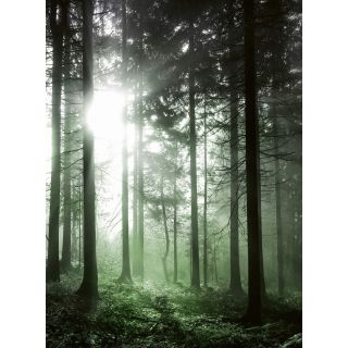 Sun Rays Nature Forest Theme 5181 -4
