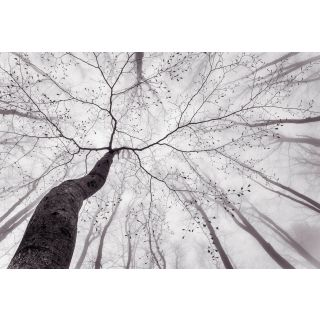 Inside the Trees, Nature Forest Theme 5413 -8