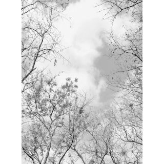 Tree Tops Nature Forest 5434-4