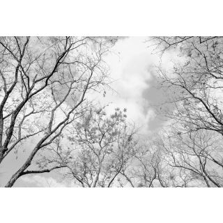 Tree Tops - Nature Forest 5434 -8