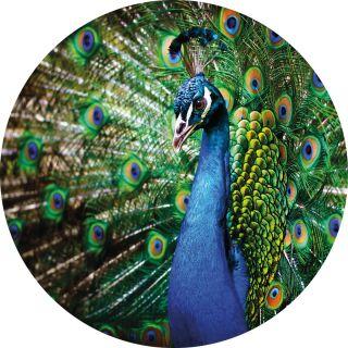 Beautiful Peacock Animal Theme 5490-R