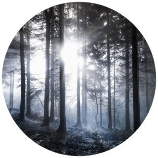 Sunshine In the Woods Nature Forest Theme 5533-R