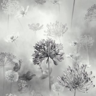 Spring Meadow Mono 697401