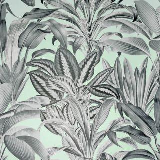 Greenhouse Plants Mint 909500